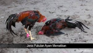 Jenis Pukulan Ayam Mematikan