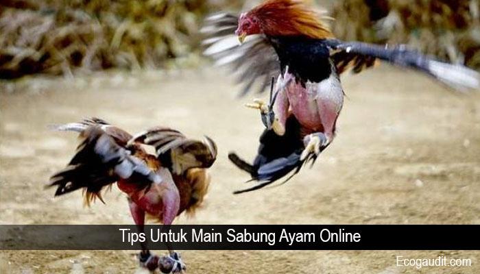 Tips Untuk Main Sabung Ayam Online